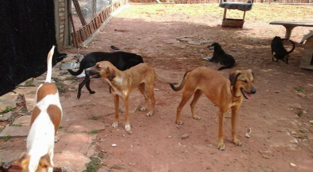 Giro Marília -Código vai à votação para mudar posse até adoção de animais; veja regras