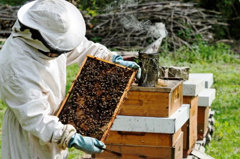 Giro Marília -Seminário na Unimar vai orientar produção de mel e riscos de agrotóxicos