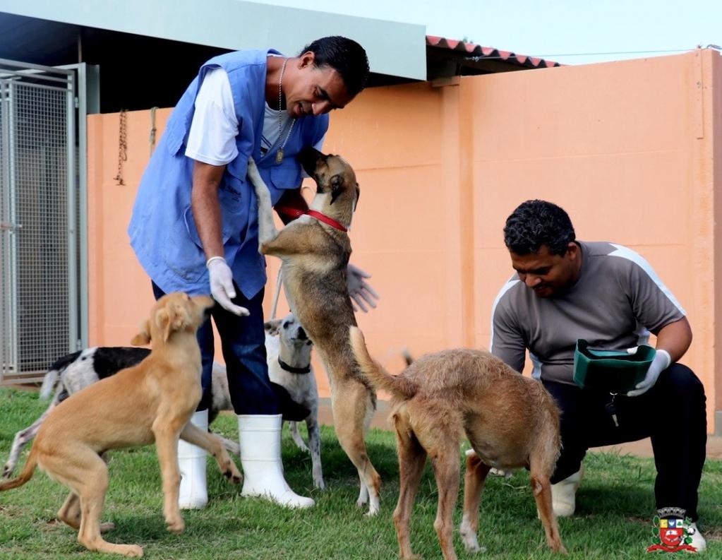 Giro Marília -Canil municipal inicia programa de adoção de animais