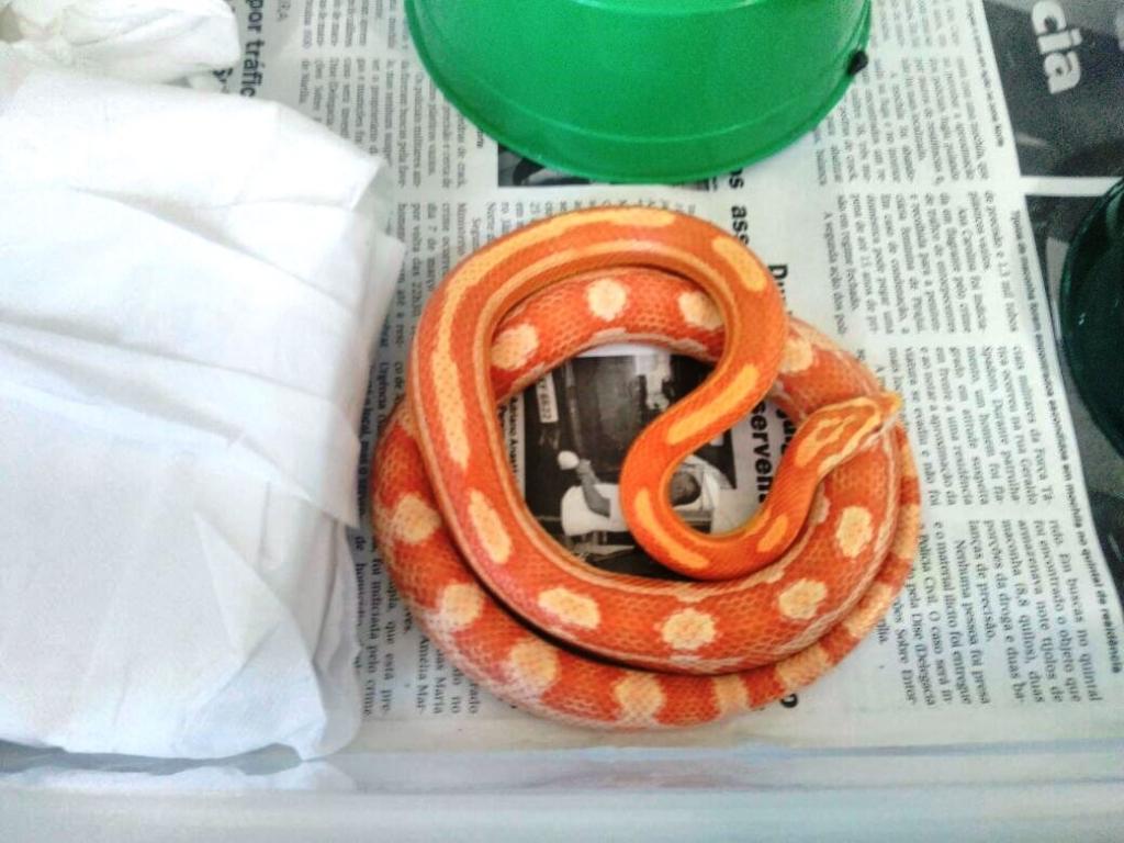 Giro Marília -Criador leva multa de R$ 3,4 mil por manter cobras em casa