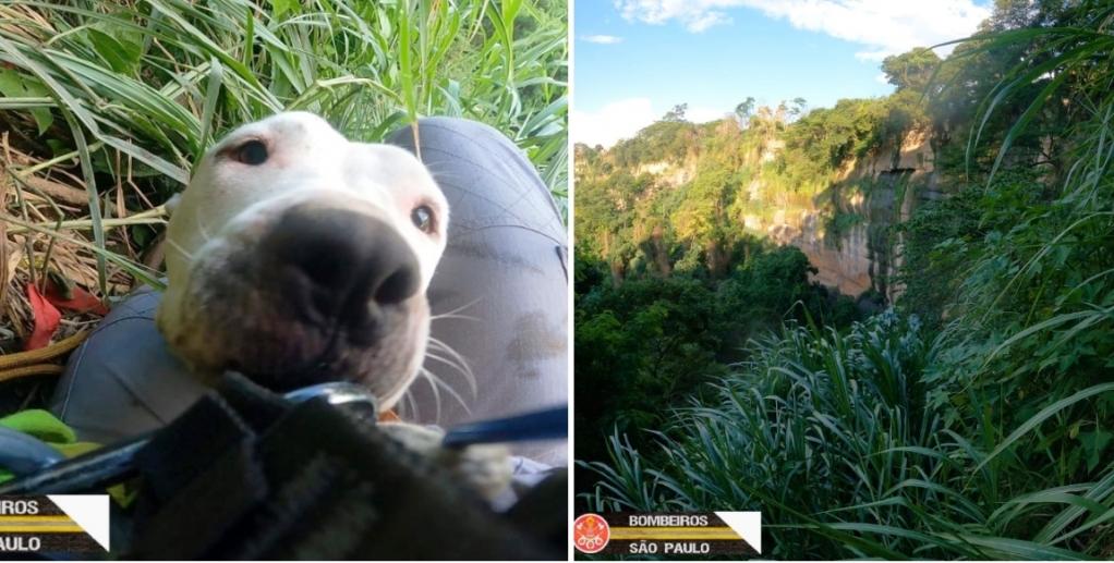 Giro Marília -Bombeiros resgatam cachorra em Itambé de Marília; desapareceu perseguindo gato
