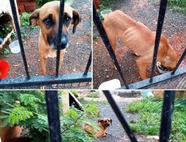 Giro Marília -Moradores denunciam abandono de cachorro em casa da zona sul de Marília
