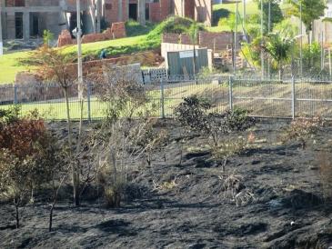 Giro Marília -ONG pede apuração de queimada com perda de árvores e animais em bairros nobres