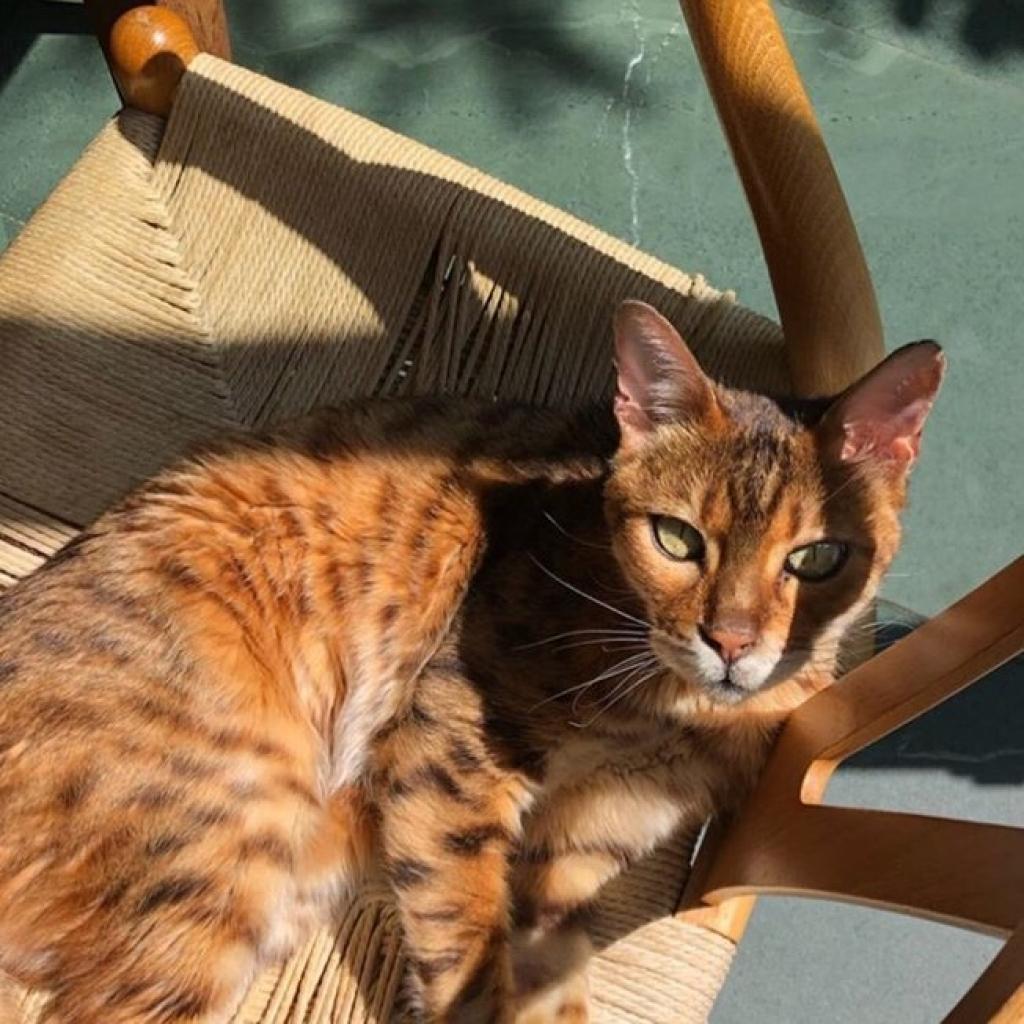 Giro Marília -Dona fica em choque ao ver gato esperto usando vaso sanitário e grava vídeo